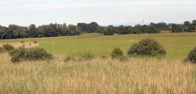 Blick auf die Riedwiesen im Wollmatinger Ried - Foto: NABU/S. Amann