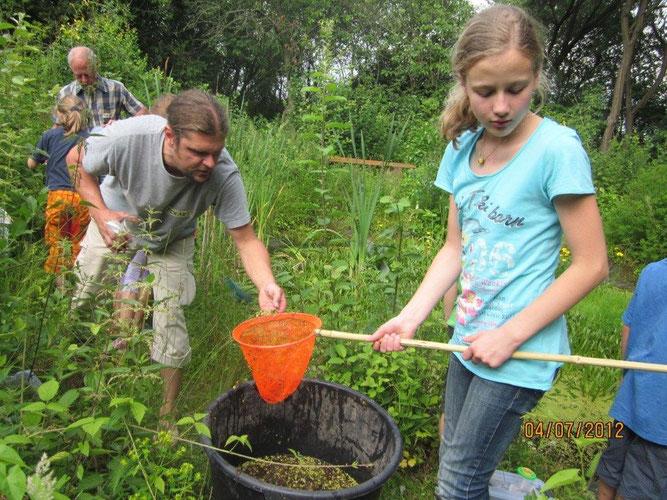 Die Kinder hatten viel Spaß beim Käschern im Teich des BUND-Gartens. Unter Anleitung von Dietrich Görtz und Eckart Prause wurden die kurzzeitig gefangenen Tiere sofort in Wasserbehälter umgesetzt und danach rasch bestimmt, bevor sie wieder zurück kamen.