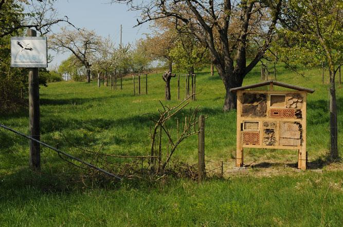 Insektenhotel auf dem Kirschenberg.