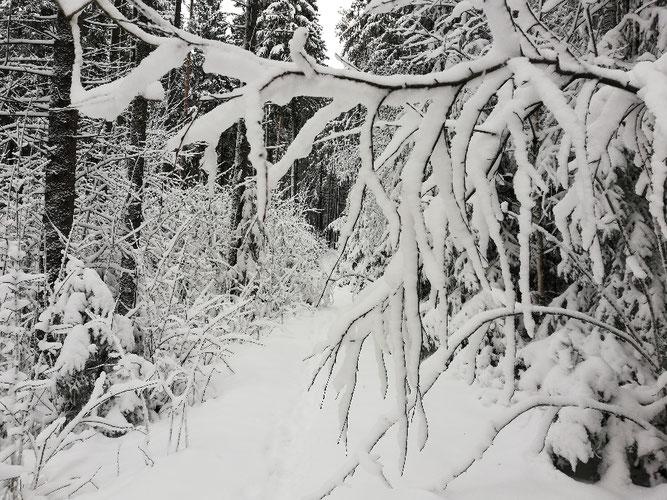 Kraftquelle, Neuanfang, Neubeginn, Wochenlieblinge, Wochenrückblick, Wintertraum, Winterlandschaft, Schnee im Fichtelgebirge