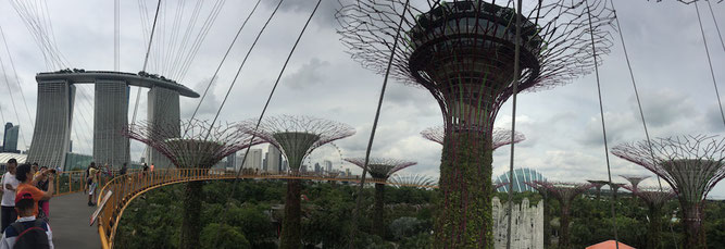 Panorama, Marina Bay, Gardens by the Bay, Supertrees, Flowerdome, Skywalk, Singapore