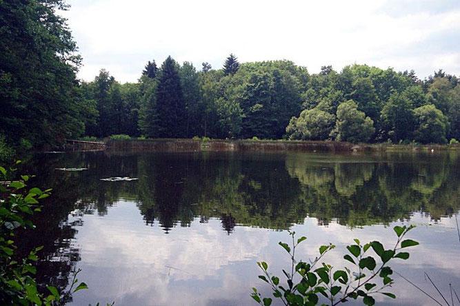 Der Teich hat eine große Bedeutung als Laichgewässer für fast alle im Ilm-Kreis vorkommenden Amphibien und ist Brut- und Nahrungsgebiet für viele Vogelarten.