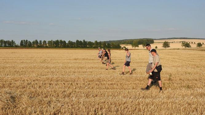 In engen Bahnen wird ein abgeerntetes Weizenfeld von Ehrenamtlichen nach Hamsterbauten abgesucht. -