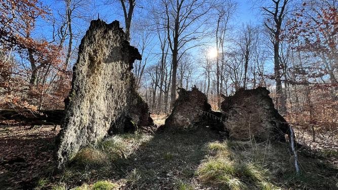 In den Bächen des Lappwalds setzen die Feuersalamander ihre Larven