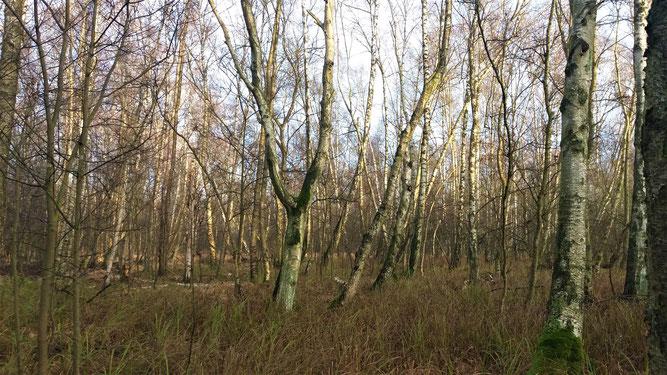 Rieseberger Moor bei Königslutter