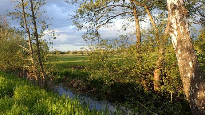 Wendschotter und Vorsfelder Drömling, Feuchtgebiet, Gräben, Biosphärenreservat, Wolfsburg, Land der 1000 Gräben
