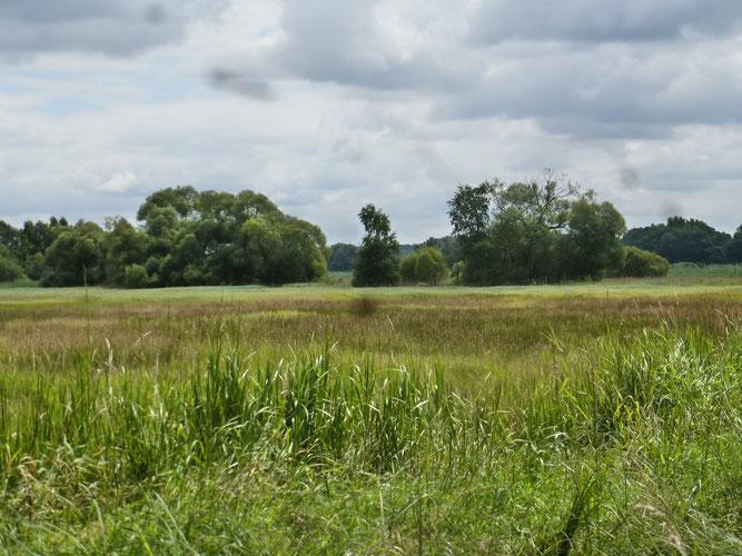 Die Nördlichen Düpenwiesen