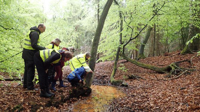 Ehrenamtliche NABU-Mitglieder  bei der Feursalamander-Erfassung im Lappwald.