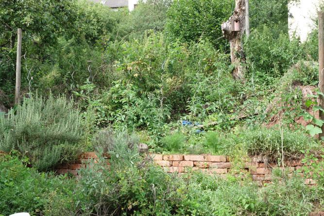 Ringelnatterfreundlicher naturnaher Garten                         Foto: NABU Wittlich/K. Valerius