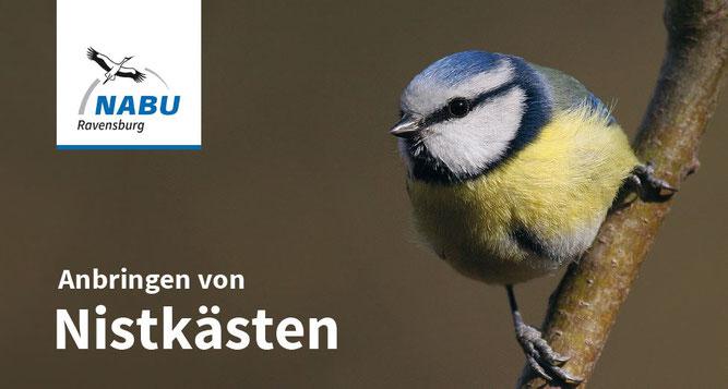 Bild: Aufhänge- und Reinigungsanleitung für Singvogelnistkästen - NABU Ravensburg