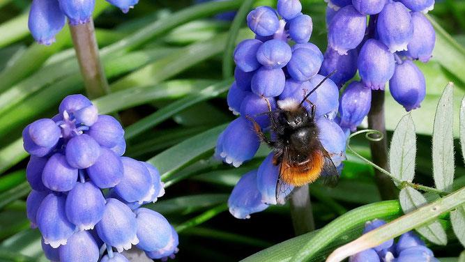 Gegen das Insektensterben
