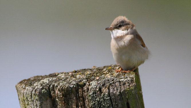 Artenreiche Vogelwelt