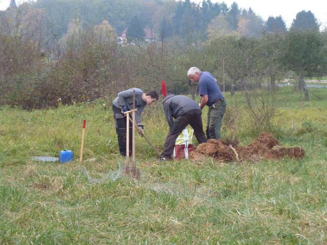 Baumpflanzaktion im NSG Tagkaute. Foto: Annette Schmitt