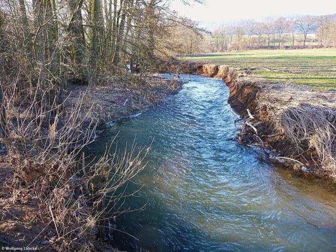 Die Wese an der Grundmühle bei Giflitz. Der Erlen-Galeriewald bildet den       charakteristischen Uferbewuchs. (Foto: Wolfgang Lübcke)