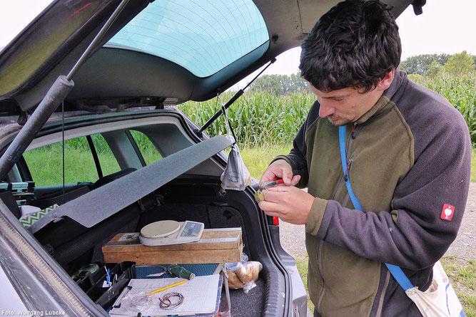 Der Kofferraum des Autos dient als Beringungsstation. (Foto: Wolfgang Lübcke)