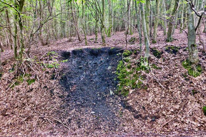 Die schwarze Bodenfärbung verrät eine Köhlerplatte. (Foto: Wolfgang Lübcke)