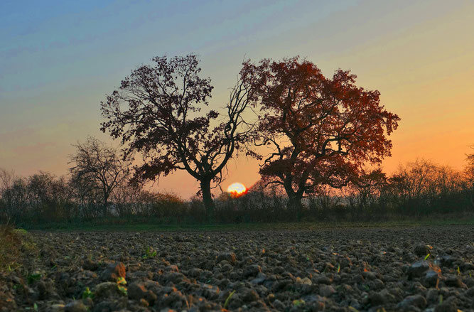 Sonnenaufgang im Hasengrund (Foto: Gerhard Steil)