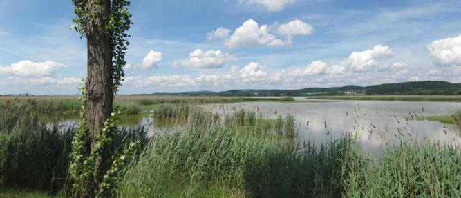 Foto: Roffle - Quelle: https://de.wikipedia.org/wiki/Datei:Wollmatinger_Ried_Reichenau.jpg