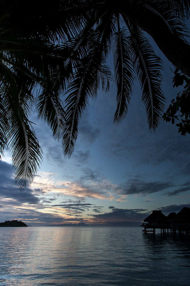 Overwater Bungalows and the sunrise, palm trees, Bora Bora, South Pacific, French Polynesia, 1213x1820px