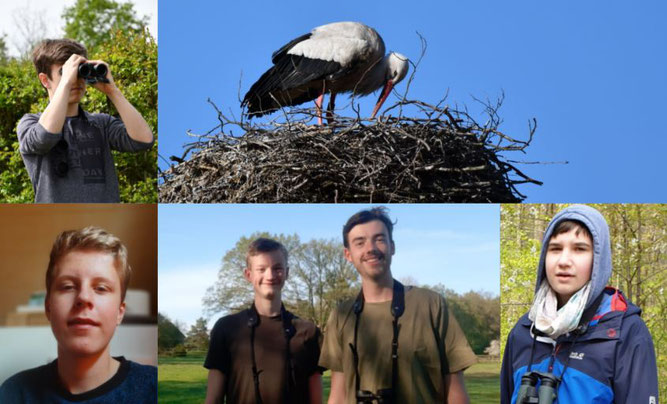 Birdrace-Teilnahme_collage-birdscouts.JPG