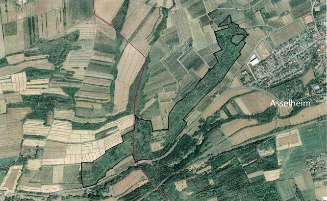 Projektfläche (schwarz umrandet) zwischen Asselheim und Mertesheim