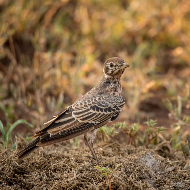 Foto: Frank Hoffmann/www.naturgucker.de