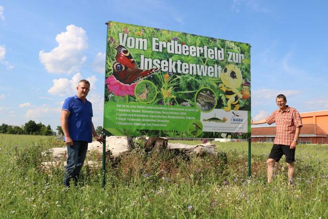 Udo Morstein, Vorstandsvorsitzender der Agrargenossenschaft Altoschatz-Merkwitz (links) und Olaf Schmidt, Leiter der NABU-Fachgruppe Ornithologie und Naturschutz Oschatz, auf der neuen Blühfläche. Foto: Christian Kunze