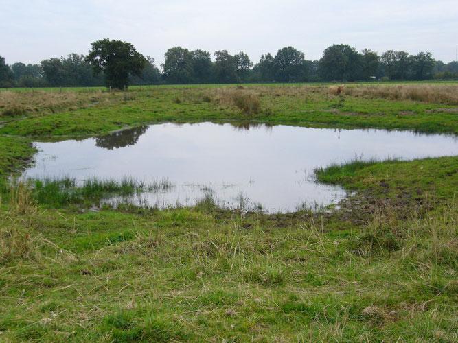 Fläche Hüttwisch in Borstel-Hohenraden