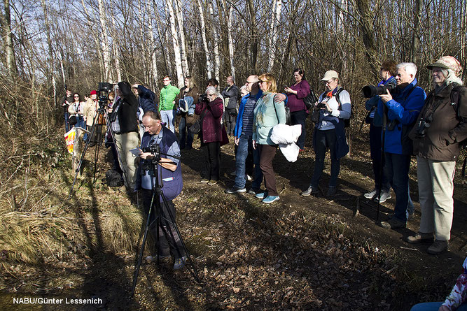 31  Teilnehmer waren der Einladung des NABU Euskirchen gefolgt und schauten begeistert auf den Neffelsee.