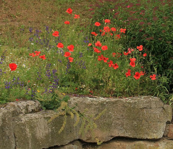Blumen am City-See