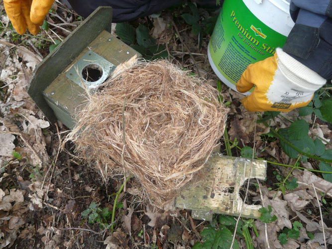 Hier war weiches Nestmaterial drin - aber nicht von einem Vogel.