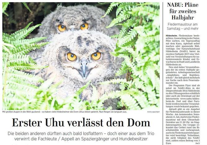 Auch bei den Dom Uhus ist der NABU beteiligt!