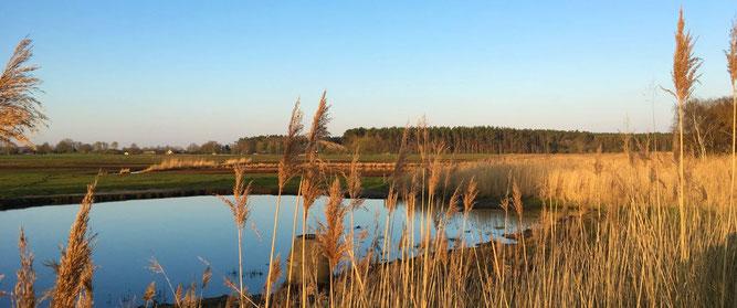 Bild Lebensraumvielfalt Hellbach-Mündung