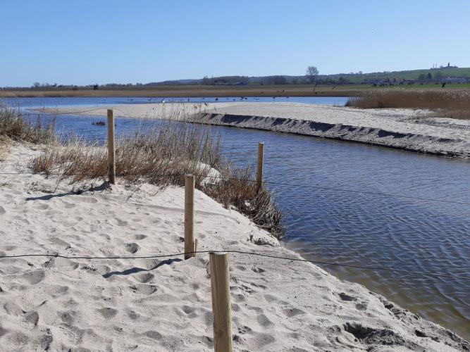 Der Lebensraum des Meerstrand-Ahlenläufers auf der Landzunge im Riedensee. Der Zaun dient als Besucherlenkung. Foto: R. Kain