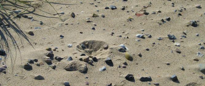 Unscheinbare Nistmulde des Sandregenpfeifers im NSG Riedensee, Foto: R. Emmerich