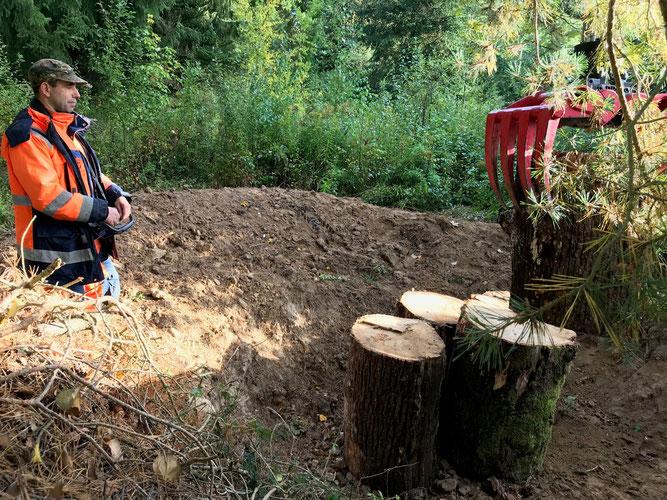 Totholz fürs Leben: Hirschkäfer legen ihre Eier in Eichen-Totholz. Der Nabu hat mithilfe des Bauhofs zwei Kinderstuben für Käfer angelegt. Mitarbeiter Sebastian Gerweck dirigiert die Eichenholzstämme an ihren Platz  Bild: Irmeli Thienes