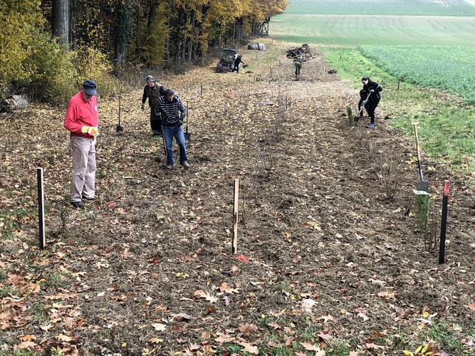 Sträucher und Bäume zu pflanzen, Totholz bereitzu- und Zäune zum Schutz vor Wildverbiss aufzustellen gehörten zu den Arbeiten, die erledigt wurden.