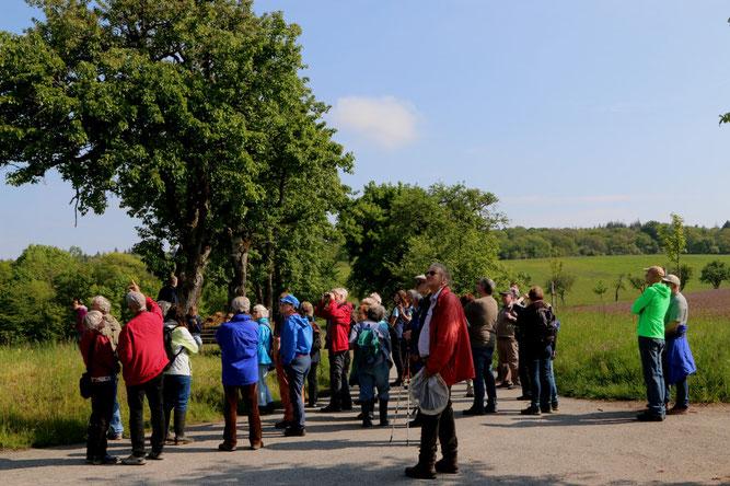 50 Teilnehmer bei der Streuobstwiesen-Führung oberhalb Ochsenbach