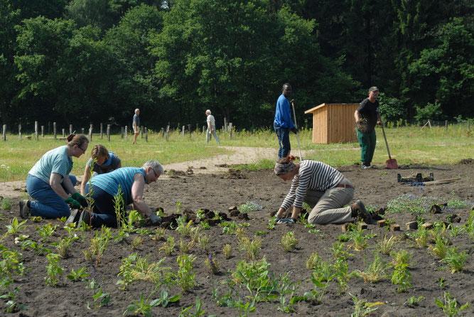 Zahlreiche ehrenamtliche NABU-Helfer, Mitarbeiter und Bewohner der Rotenburger Werke halfen bei der Umsetzung des Projektes