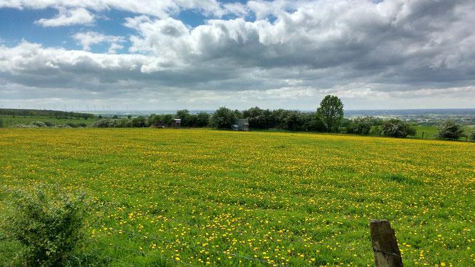 Naturschutzgebiet Rosenberg in Bad Lippspringe                               (Foto: HG Festl)