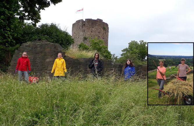 Die aktiven Mitglieder des NABU bei der Arbeit auf Burg Blankenberg
