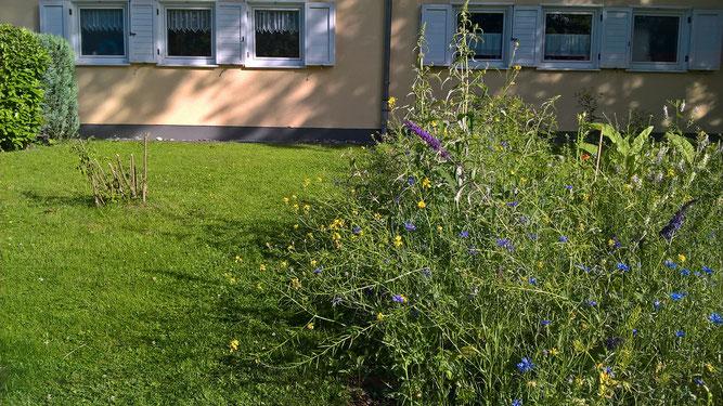 Dieses Foto zeigt nochmal den Kontrast zwischen Rasen und Blumenwiese (Foto: R. Steinwarz)
