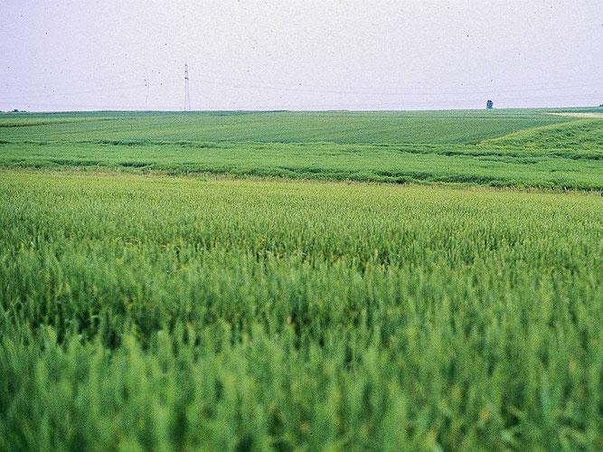 Ausgeräumte Landschaften, Foto: Marcel Weidenfeller