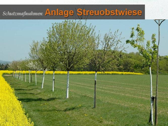 Neuanpflanzung Obstbaumreihe, Foto: Peter Fasel
