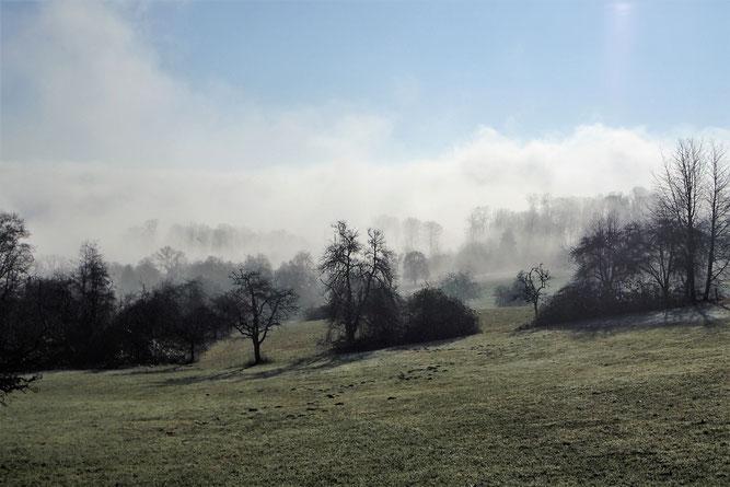 Waldhilsbacher Wiesen im Nebel