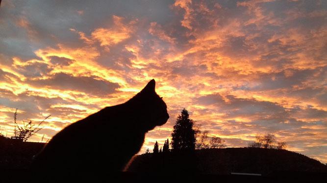 Meine Katze im Morgenrot (Bild von Eliane Pedal)