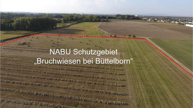 """Foto: NABU Büttelborn (Carsten Ott) """"Nördlicher Teil"""" (Blickrichtung: Norden)"""