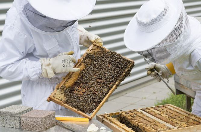 Rahmen einer konventionellen Bienenbeute (Foto: pixabay)