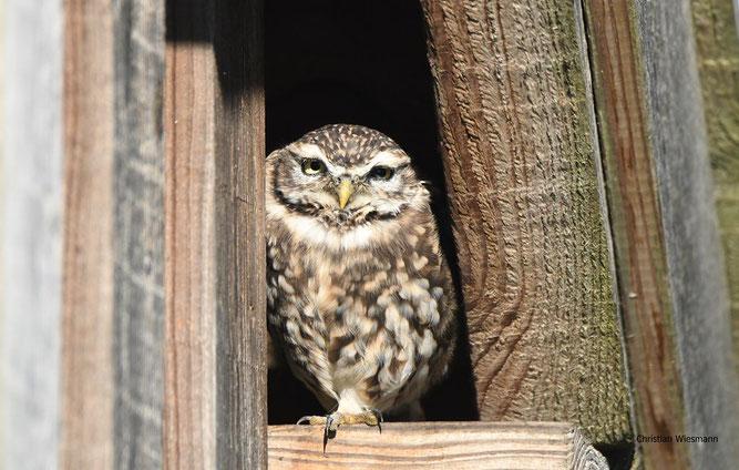 Foto: Ch. Wiesmann (www.naturgucker.de)