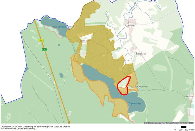 """Rot umrandet unsere Grundstücke am Thymensee - alle gelb markierten Flächen gehören dem Land. Auch sie sollen als Nationales Naturerbe """"Dahmshöhe"""" bzw. als Kernzone des Naturschutzgebiets """"Thymen"""" dauerhaft einer natürlichen Entwicklung überlassen werden."""